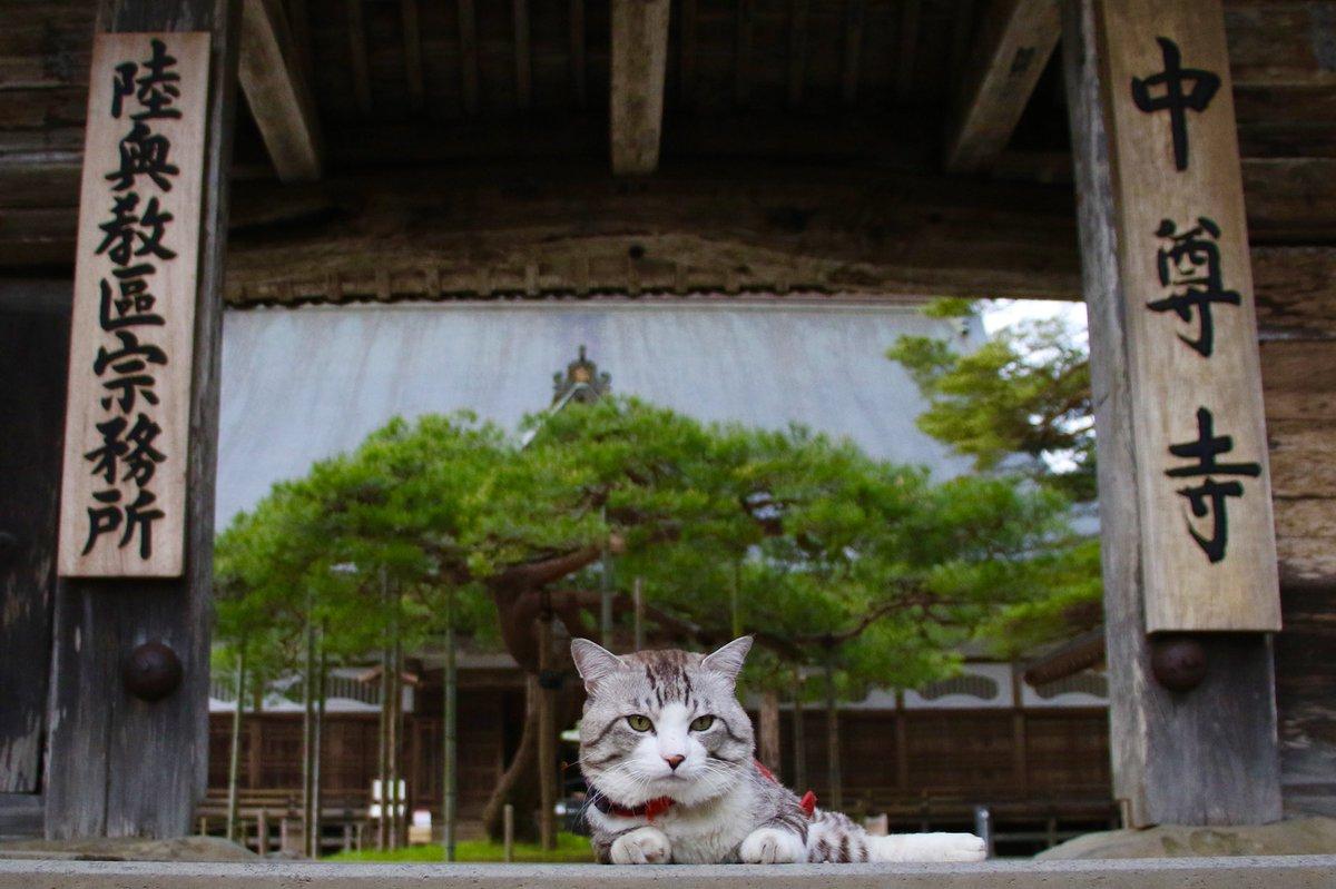 猫 画像 cat image 岩手県が誇る世界遺産、中尊寺はとても素敵だったにゃり?  岩手縣自豪的世界遺產,中尊寺非常漂亮喵哩?           0