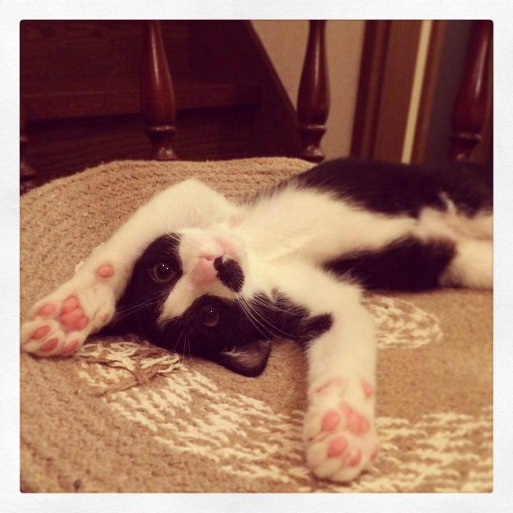 猫 画像 cat image ごま蜜、昔からゴロンゴロンとするのが好きな猫ではありました  0