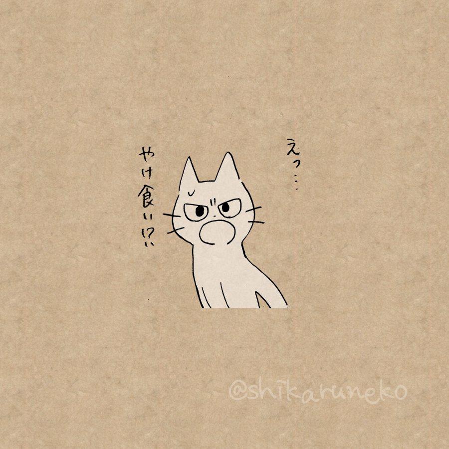猫 画像 cat image やけ食いする人を叱ってくれる猫  1