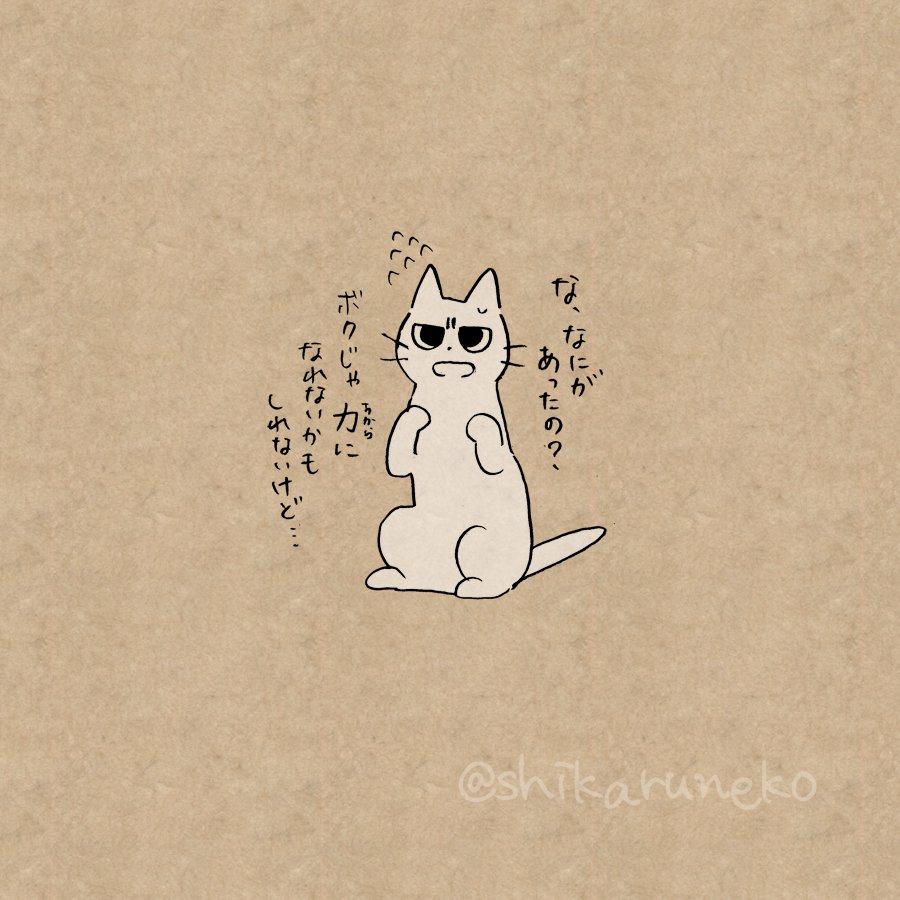 猫 画像 cat image やけ食いする人を叱ってくれる猫  2