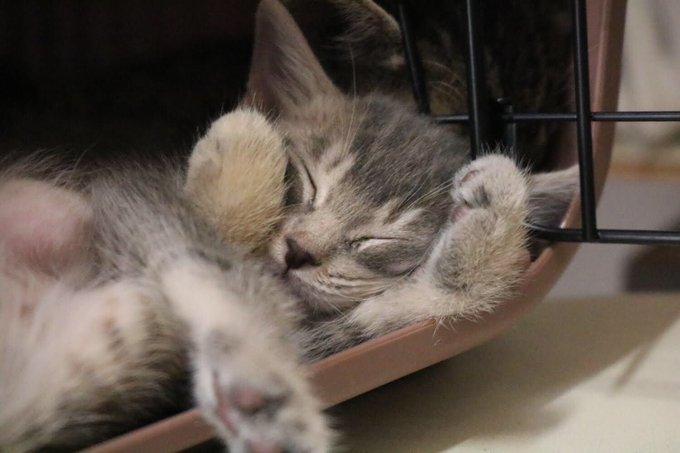 猫 画像 cat image お仕事の皆様 勤労意欲がダダ下がるショットを そっと。