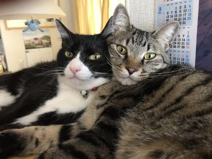 猫 画像 cat image 本当にたくさんのリツイート・いいねありがとうございます! マーブルとチョコには猫缶がふさわしい!
