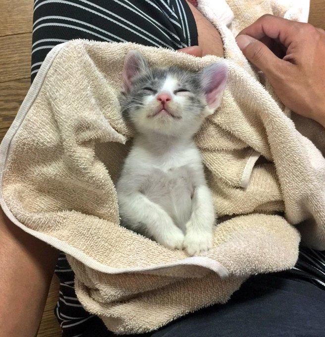 猫 画像 cat image 昨年一気に4匹保護しました。 今まで猫は飼ったこと無かったけど、こんなにかわいいなんて。