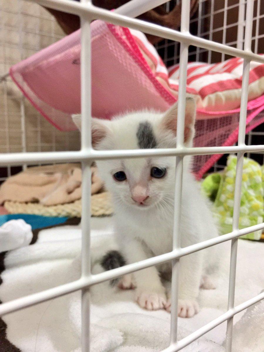 猫 画像 cat image 昨年一気に4匹保護しました。 今まで猫は飼ったこと無かったけど、こんなにかわいいなんて。    1