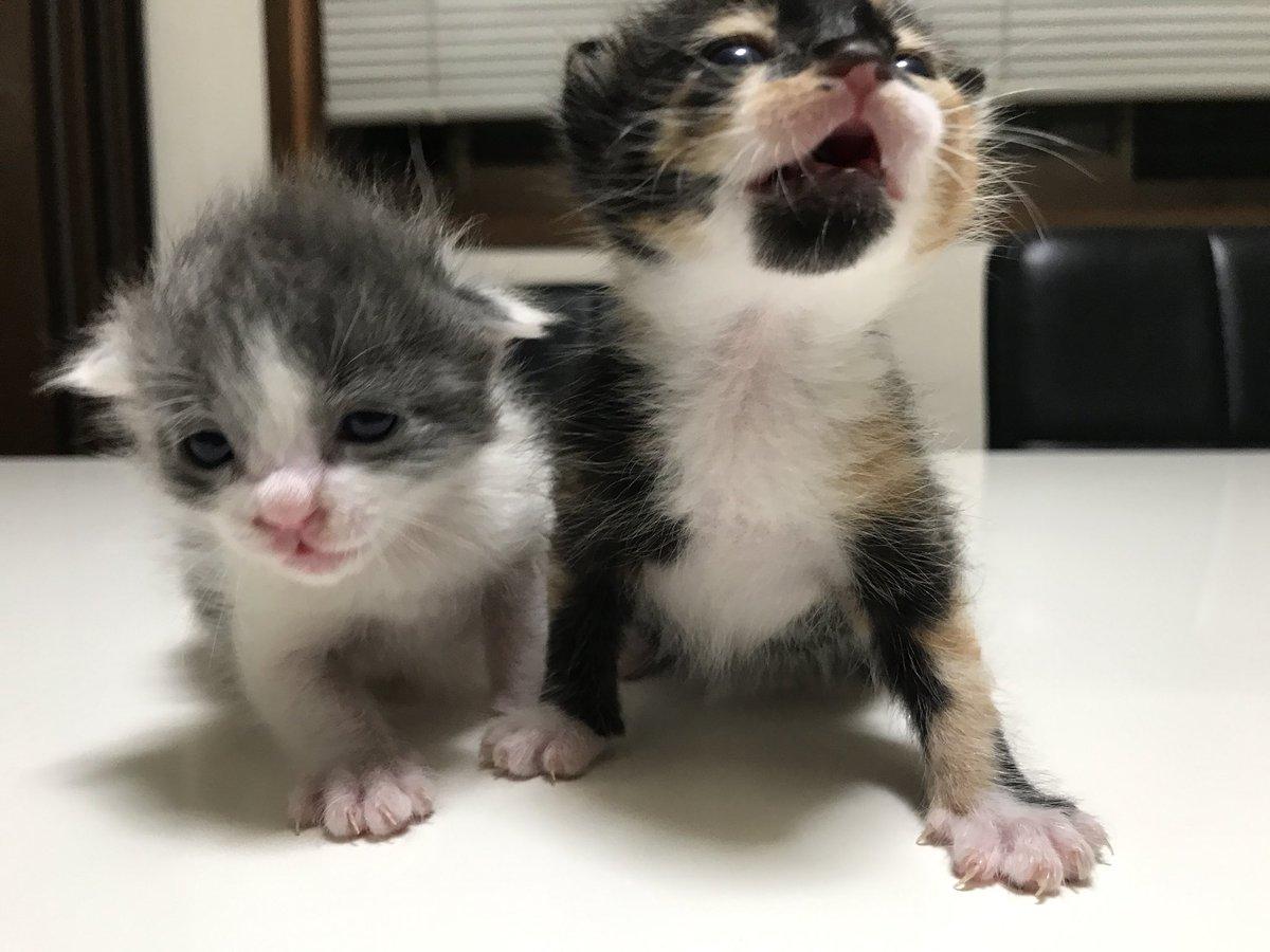 猫 画像 cat image 昨年一気に4匹保護しました。 今まで猫は飼ったこと無かったけど、こんなにかわいいなんて。    2