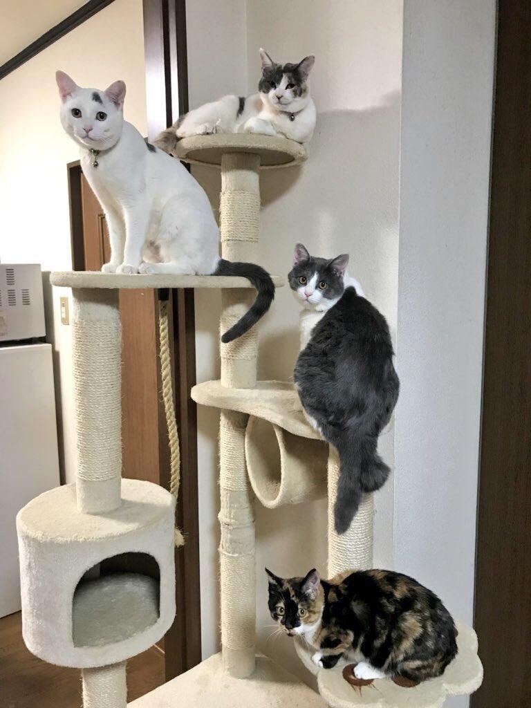 猫 画像 cat image 昨年一気に4匹保護しました。 今まで猫は飼ったこと無かったけど、こんなにかわいいなんて。    3