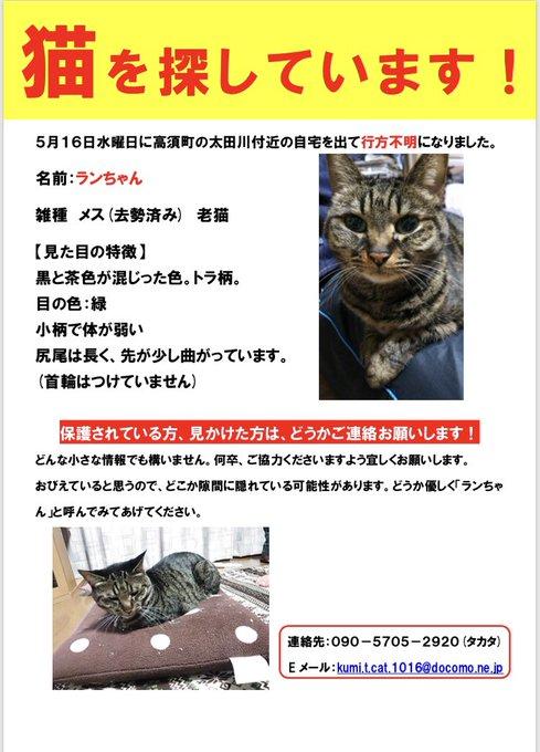 猫 画像 cat image 我が家の猫が一匹 行方不明になりました もし見かけたら連絡ください 拡散おねがいします