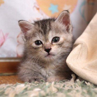猫 画像 cat image マグさんは美人になったし、ポタヤンはイケメンになった…?✨2匹とも、保護猫です??
