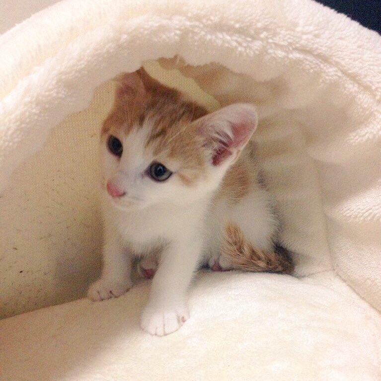 猫 画像 cat image マグさんは美人になったし、ポタヤンはイケメンになった…?✨2匹とも、保護猫です??   2