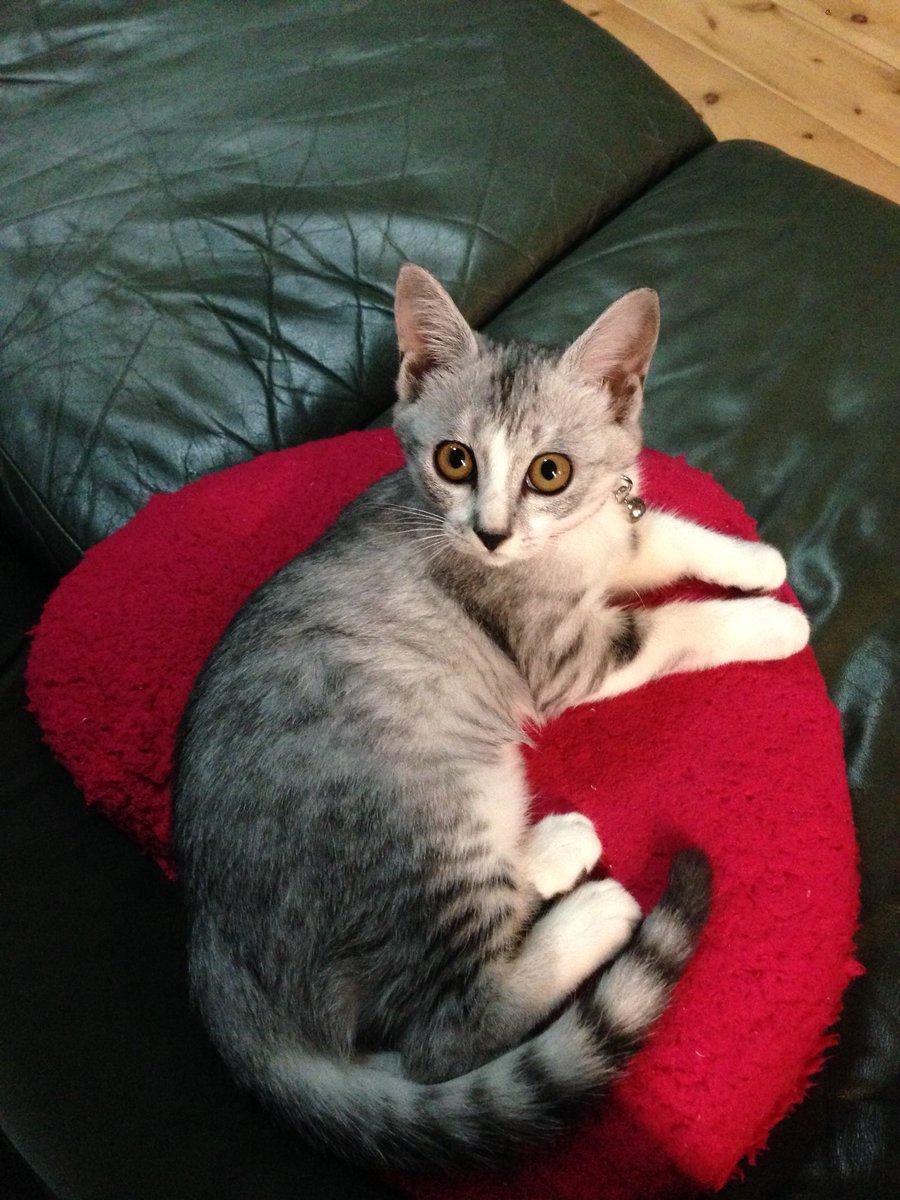 猫 画像 cat image   ひたすらに美猫。  2