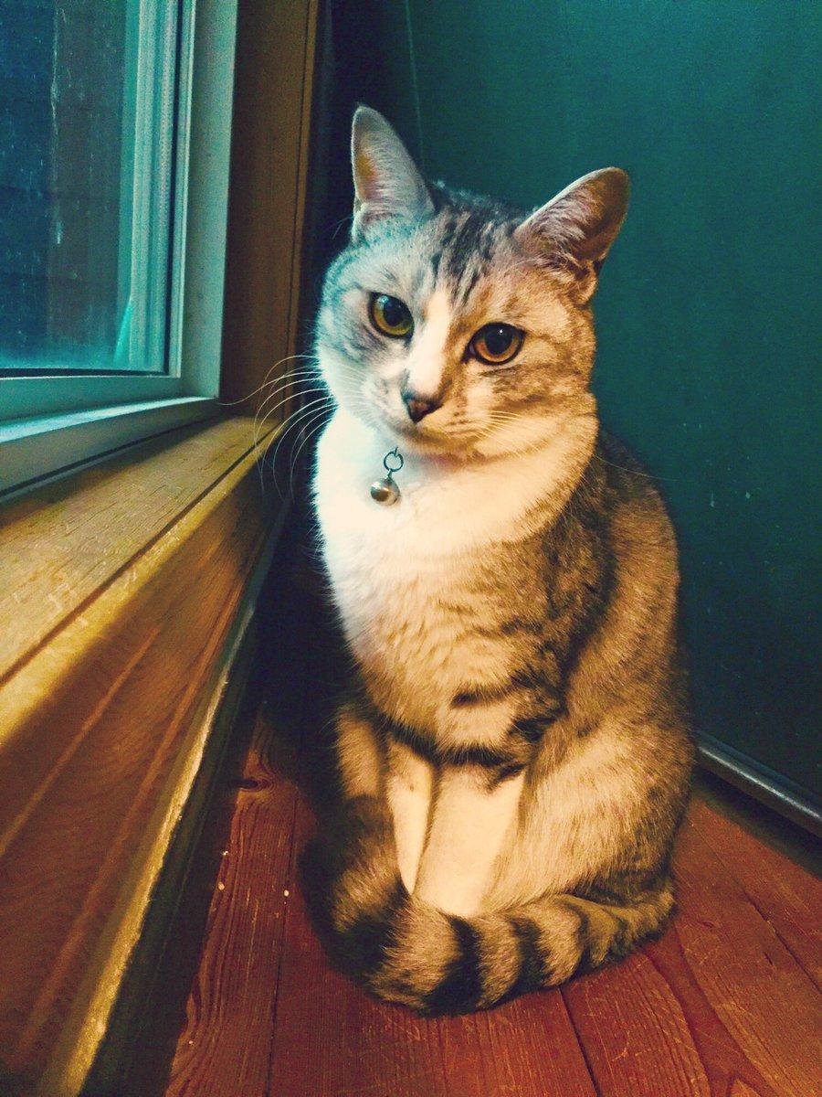 猫 画像 cat image   ひたすらに美猫。  3