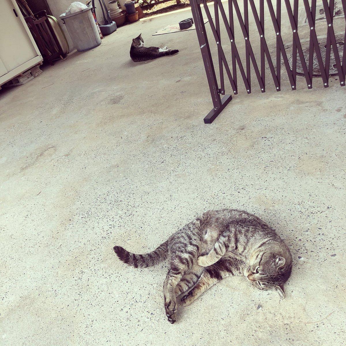 猫 画像 cat image 猫ちゃん?暑くてゴロン?  0