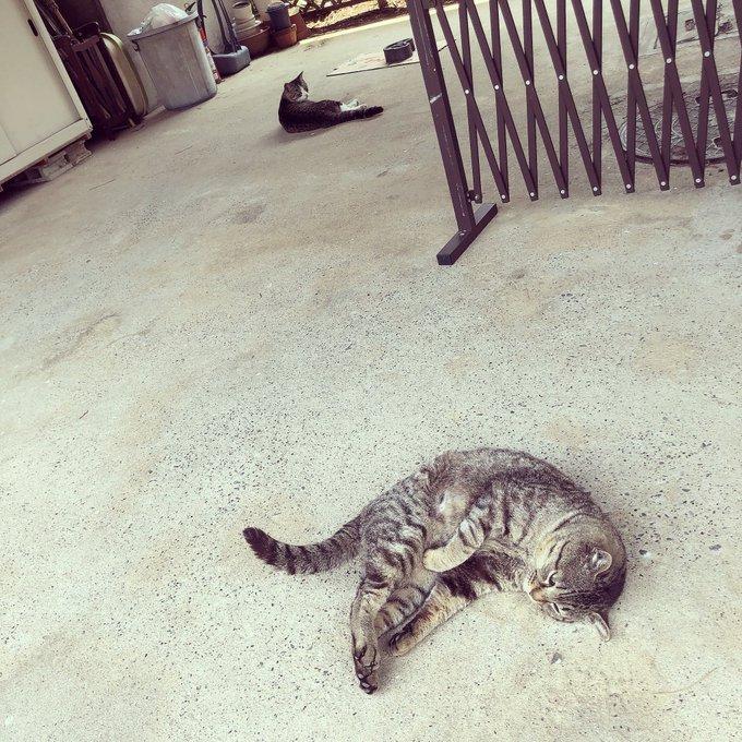猫 画像 cat image 猫ちゃん?暑くてゴロン?