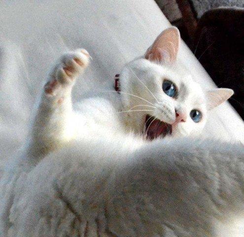 猫 画像 cat image イェぃ!みんな元気ニャン!       0