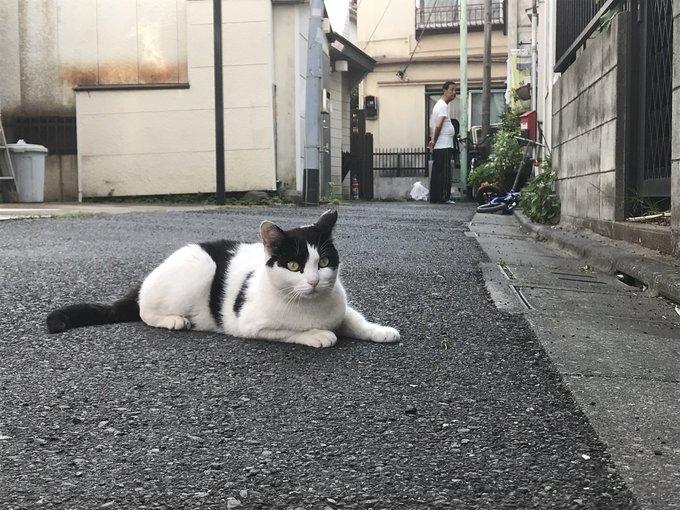 猫 画像 cat image 猫の住みやすい街。
