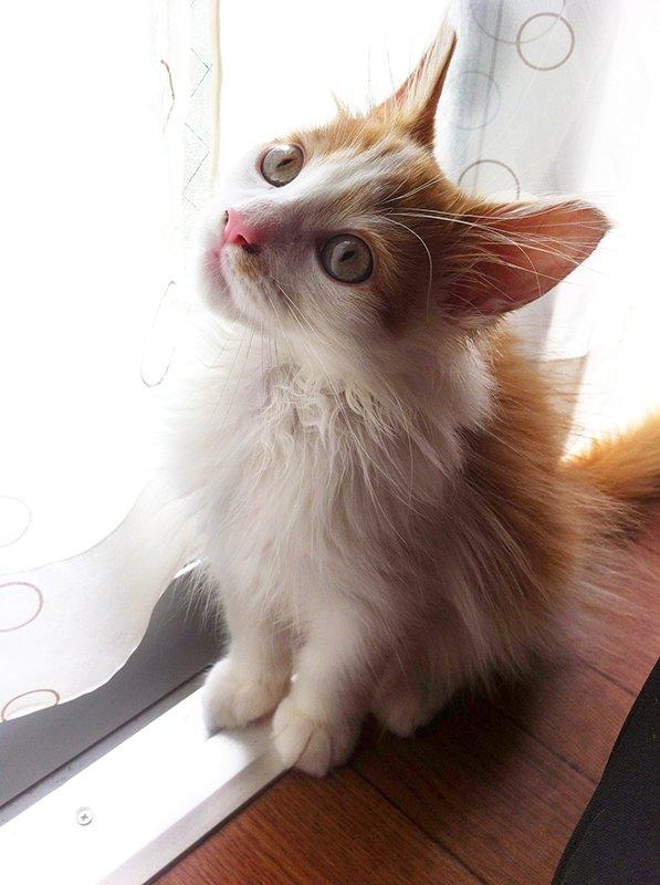 猫 画像 cat image 我が家の猫も、モフレベルがずいぶん上がりました?  『』完成披露試写会のご応募は明日が締め切りですよー??    0