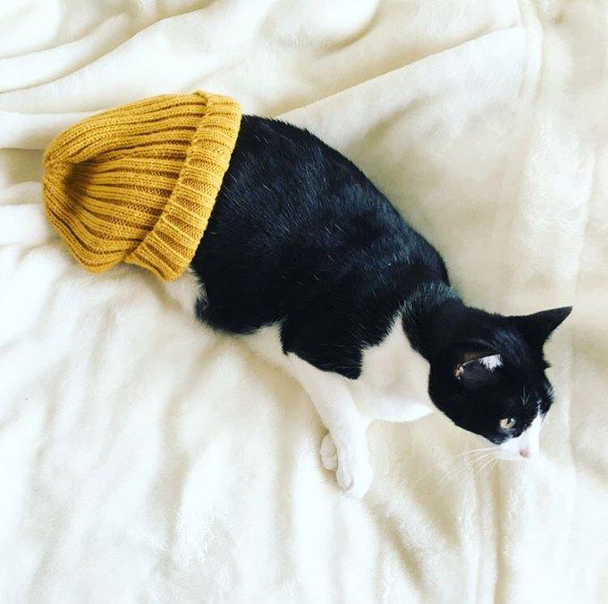 猫 画像 cat image 保護猫の中で一番小さくてか弱そうな子を連れてきたんだけど…? 関取になったとさ。