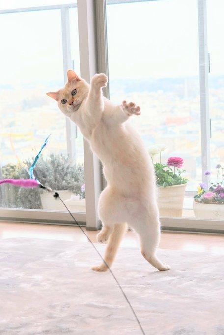 猫 画像 cat image どすこい チャコたん?  週末まであと1日だあ?