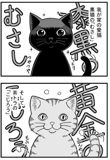 猫 画像 cat image 今日は『乙女戦争』の原稿をお休みして、ねこマンガ描いてました。我が家の飼い猫の紹介というか、ただの惚気マンガです♪