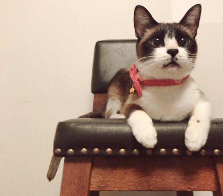 猫 画像 cat image もともと捨て猫だったミルちゃん うちに来てくれてありがとうね??     2