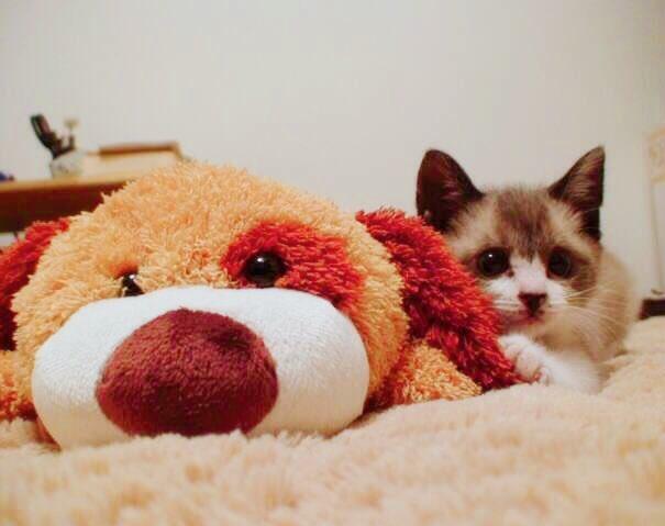 猫 画像 cat image もともと捨て猫だったミルちゃん うちに来てくれてありがとうね??     1