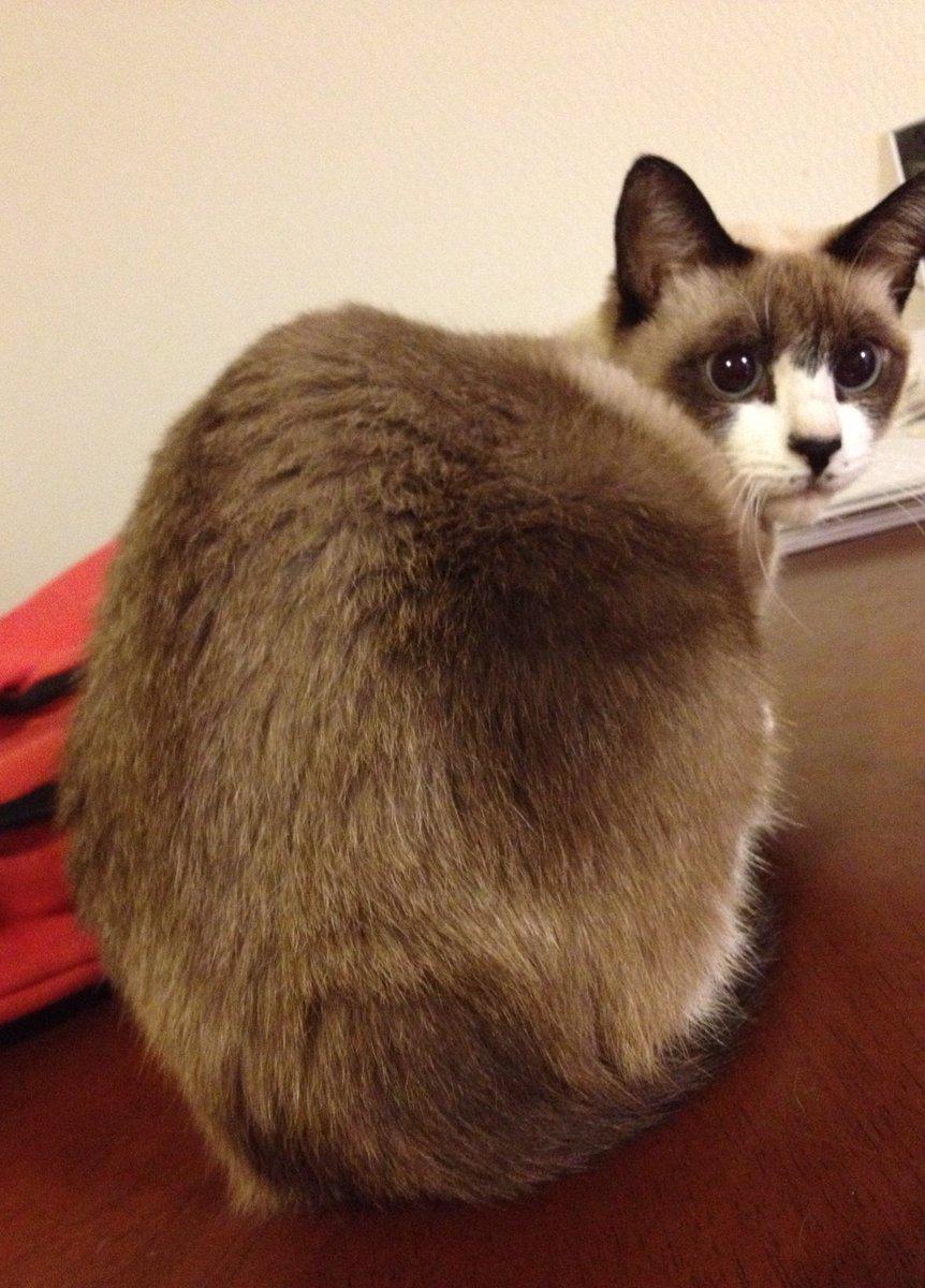 猫 画像 cat image もともと捨て猫だったミルちゃん うちに来てくれてありがとうね??     3