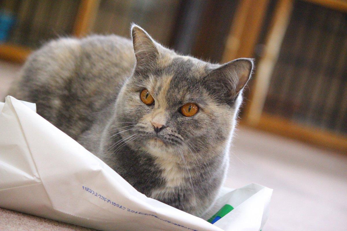 猫 画像 cat image スタッフひなち:さつき「なんでお客さんこないの...??」(ゴゴゴゴゴ...) ペコ「またノーゲスね...」(ゴゴゴゴゴ...) 猫ちゃん達暇そうです... 貸切までまだお時間ありますので是非ご来店ください!!!   1