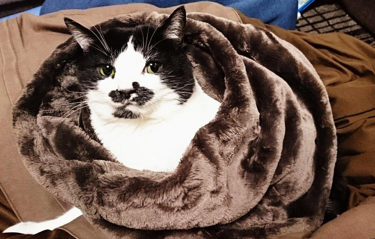 猫 画像 cat image   初めての散歩(?)で母猫について行けずミーミー鳴いていた、小脳形成不全の弊ぬこ胡麻チュロスも見た感じとても健やかに育ってる(*´∀`*)サリ〜♪  3