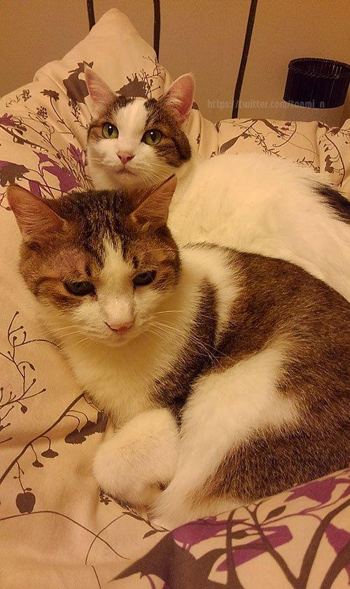 猫 画像 cat image この流れには乗らざるを得ない すっかりおじいちゃん猫Sだけどこれからも元気でいておくれ   1