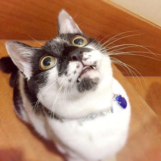 猫 画像 cat image 生後1カ月前で別の野良猫に喉噛まれて穴が空き親猫が騒いでるところを保護。病院の先生に9割助からないと言われた豆がこんなにも元気に成長しました   3