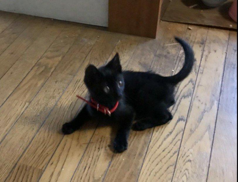 猫 画像 cat image    従姉妹の家の猫  0