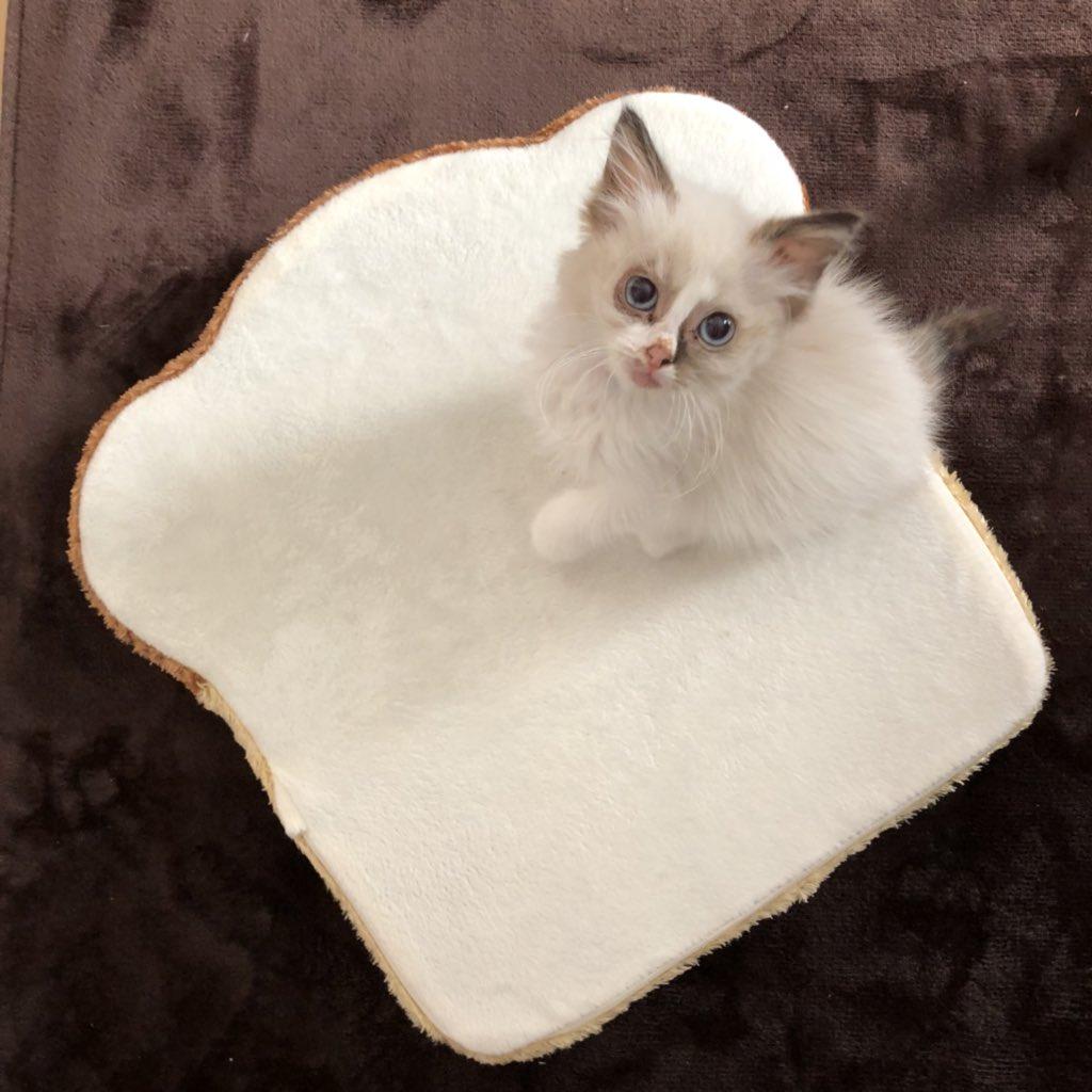 猫 画像 cat image 猫っぽくなった???   0