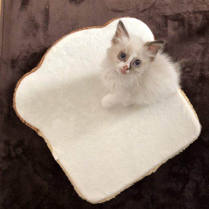 猫 画像 cat image 猫っぽくなった???