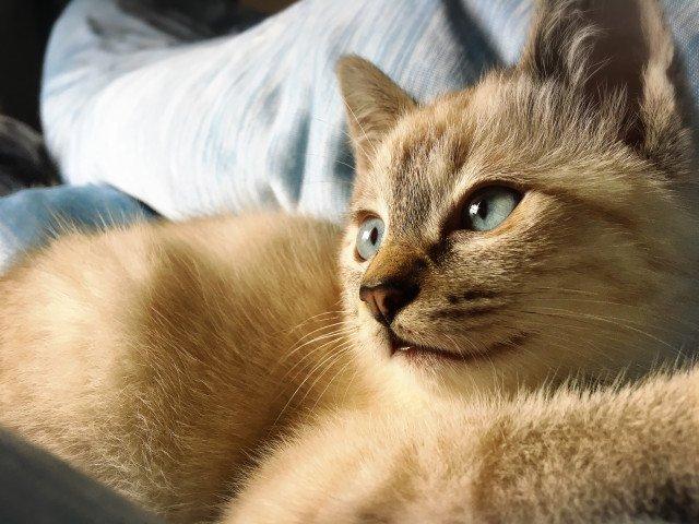 猫 画像 cat image 色が変わったにゃ!?