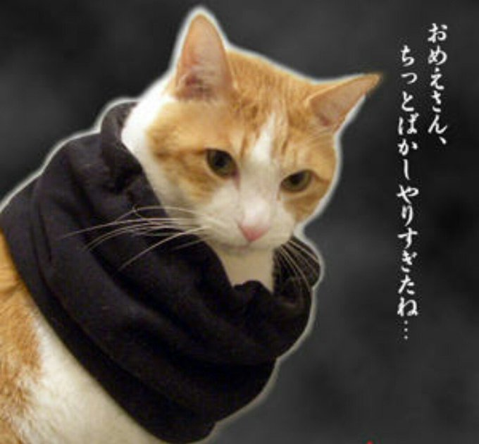 猫 画像 cat image 猫に熱湯 ガスバーナー  生きたままだよ、生きたまま おめぇさんの罪は重いよ、、