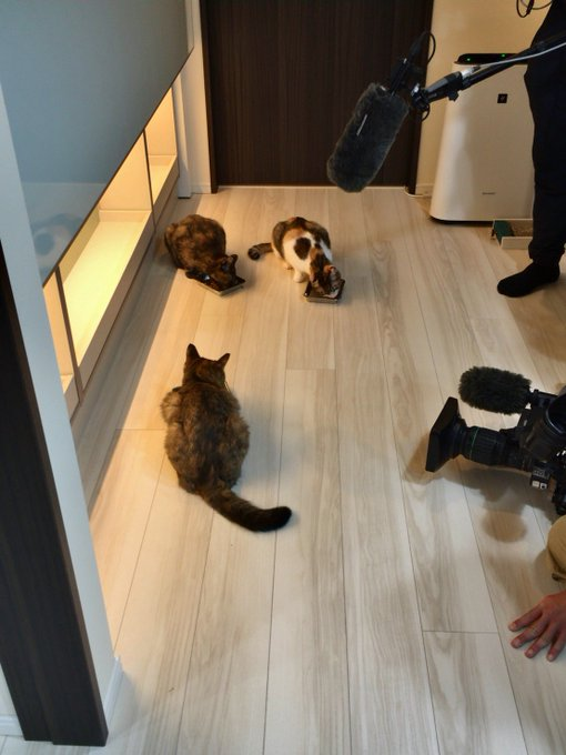 猫 画像 cat image NHKの取材最終日。最後のカット。スタッフのみなさんも猫さんたちも、お疲れさまでした。