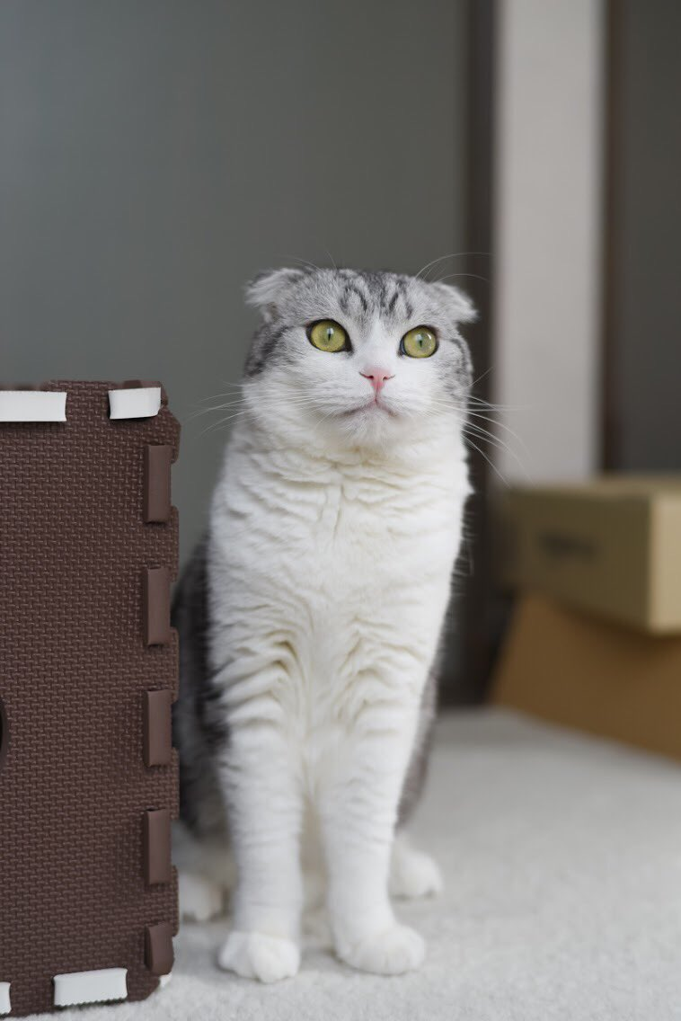 猫 画像 cat image 待機中じゃ     0