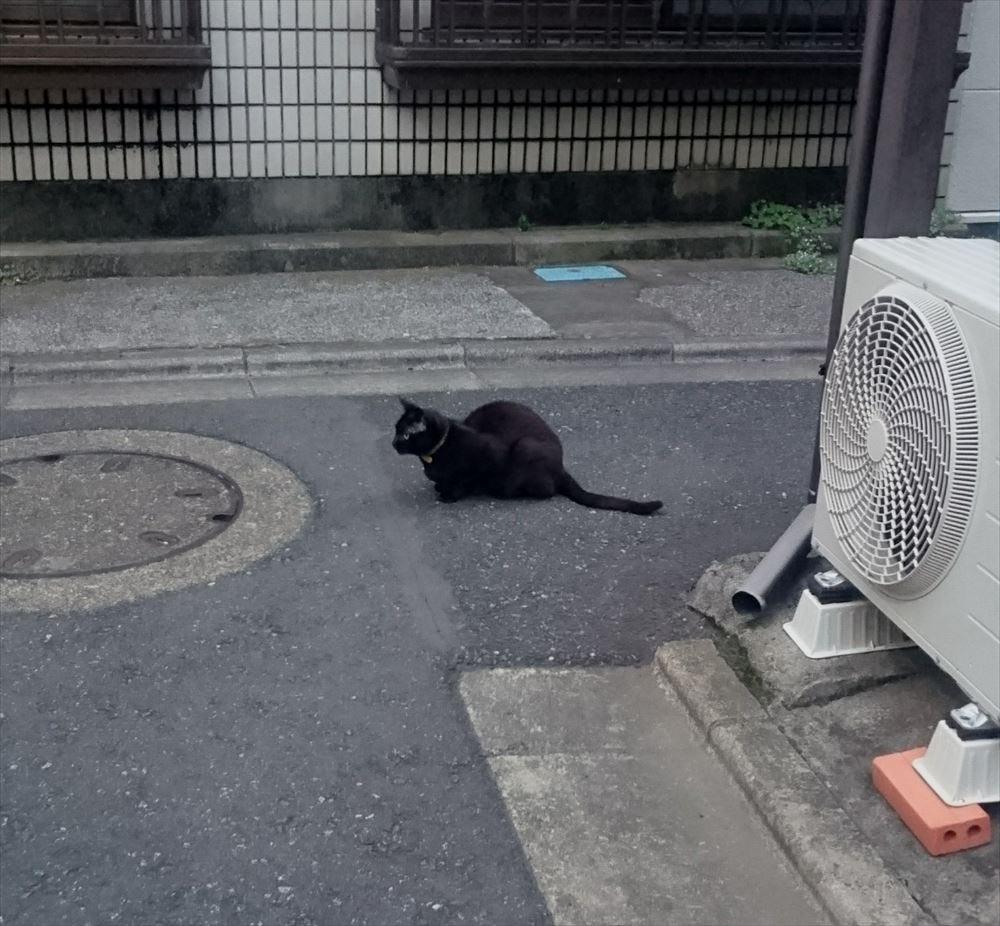 猫 画像 cat image 住宅街で見かけた黄色い首輪の黒猫。ごろーんと転がって一瞬腹踊りを見せてくれたのですが、「あ、やべっ! 知らない人だった」という顔をして逃げて行きました。  0