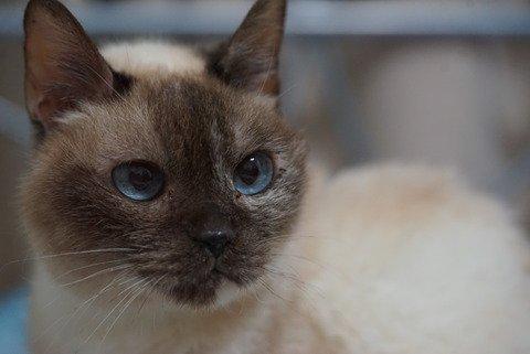 猫 画像 cat image blog更新 ねこかます : 女性来訪(猫の) 20180517