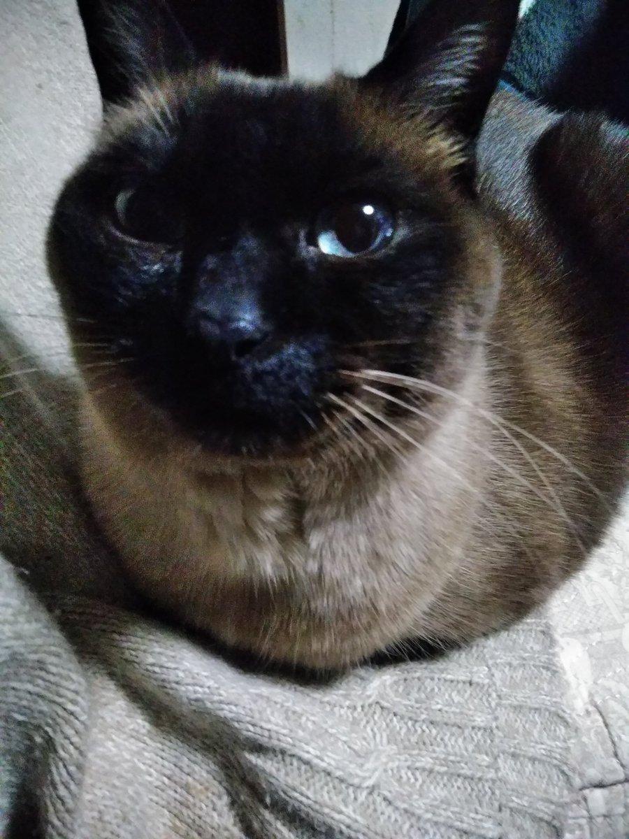 猫 画像 cat image    黒くなったなあ……。  1