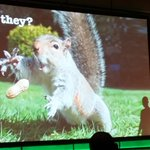 Image for the Tweet beginning: Fun with Squirrels and Robot