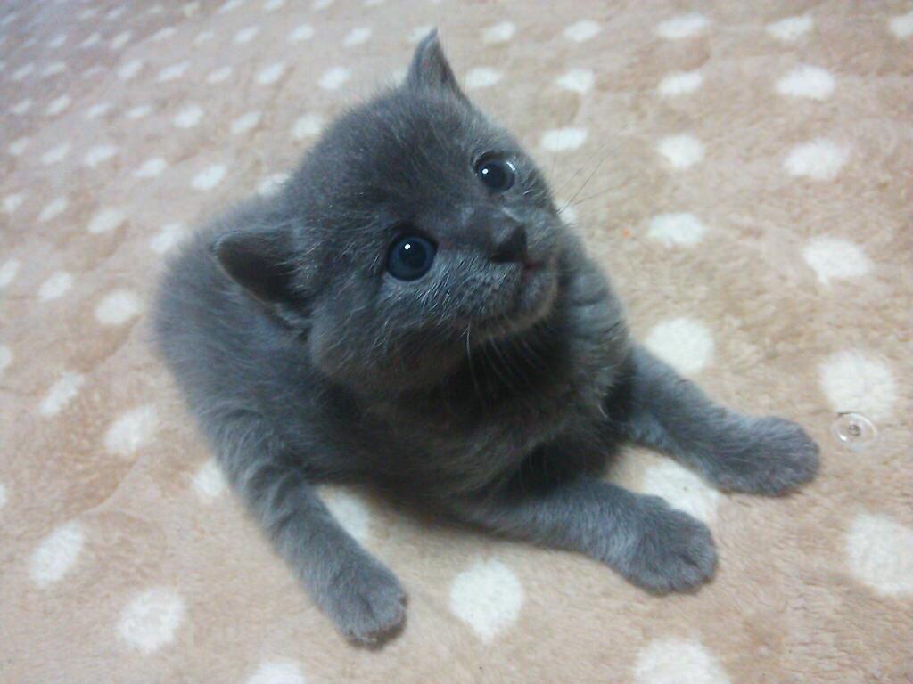 猫 画像 cat image モグラ→子猫→猫    1