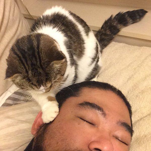 猫 画像 cat image ときどき猫にすら起こされる  1