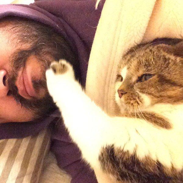 猫 画像 cat image ときどき猫にすら起こされる