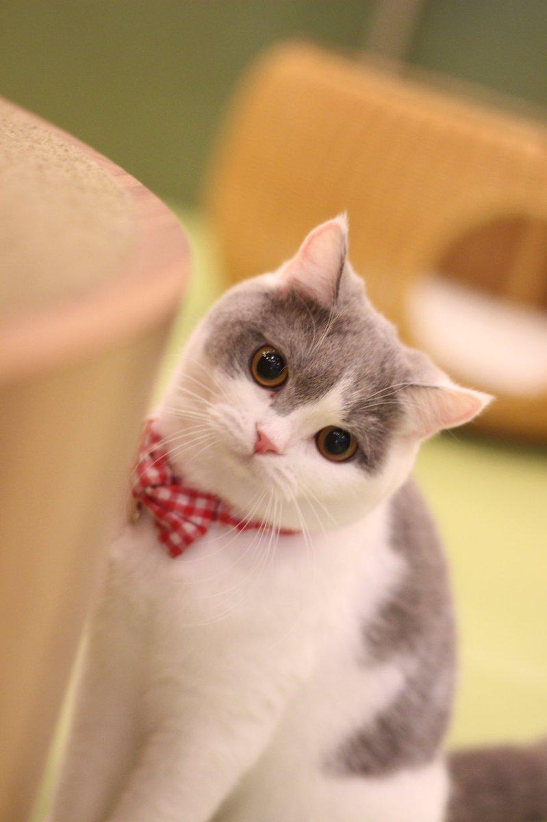 猫 画像 cat image 明日も会いに来てにゃ??               0