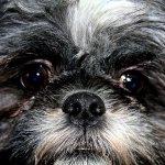 Image for the Tweet beginning: Dog Stolen by Skateboard-Wielding Trio