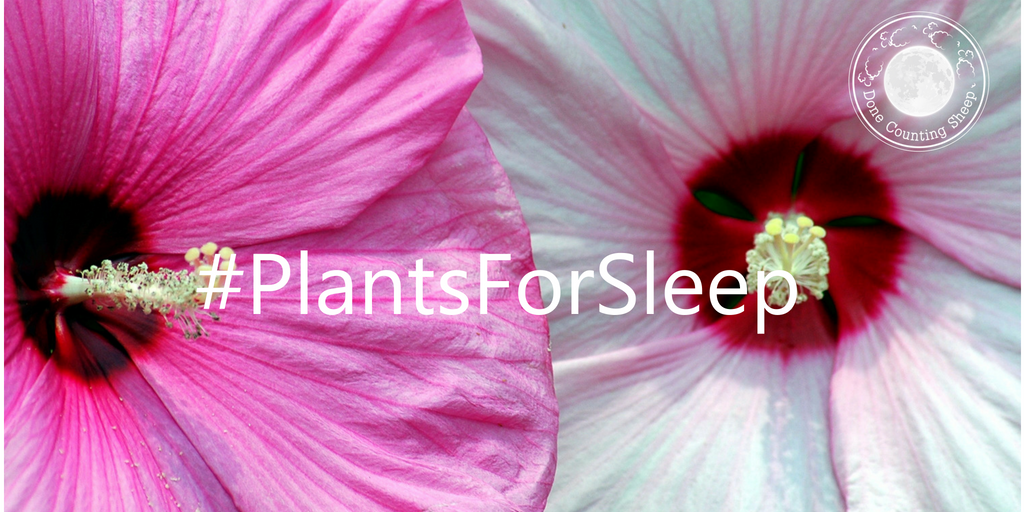 Donecountingsheep On Twitter Hibicus For Sleep The Hibiscus