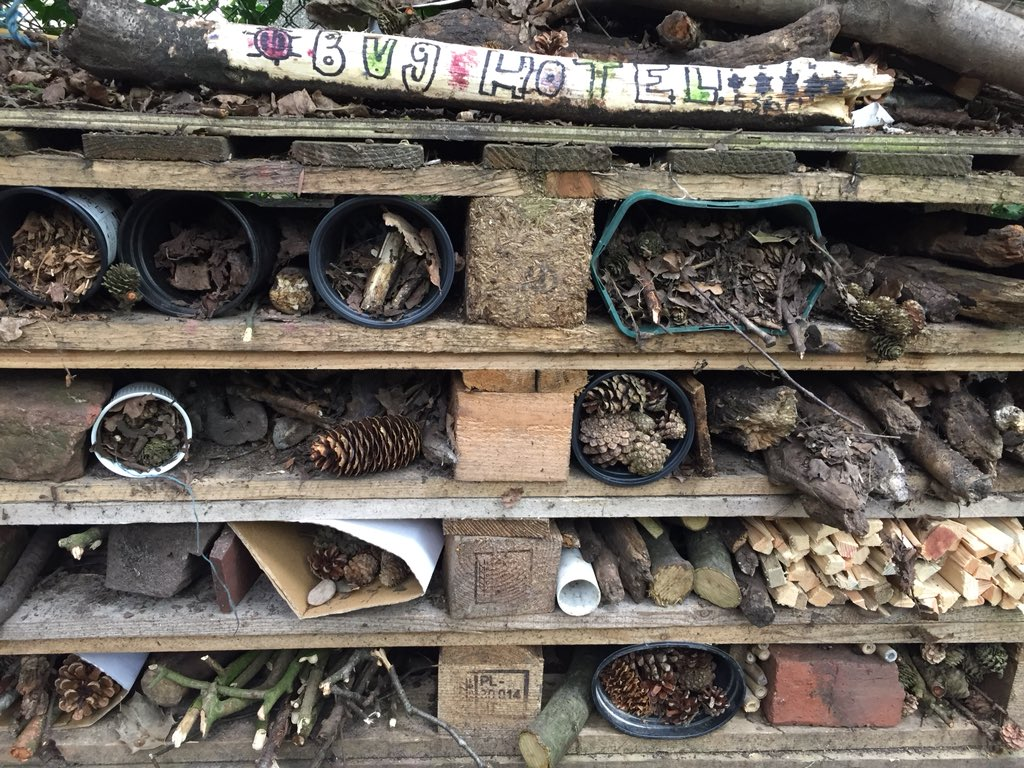 test Twitter Media - Do you like our upgraded bug hotel? 5 star accommodation for all the lucky creatures we find in the woods. #gorseyrec #gorseyy5 #gorseyscience https://t.co/tavvADq5Yt