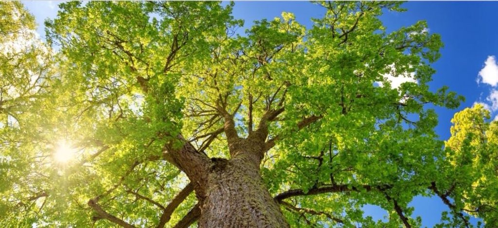 It's #Loveatreeday! Did you know Surrey Heath is the greenest Borough with the greatest #tree canopy coverage in Britain at 40.6%?  We're working hard to maintain this position and protect this amazing natural feature.<br>http://pic.twitter.com/sNPd9rM05C