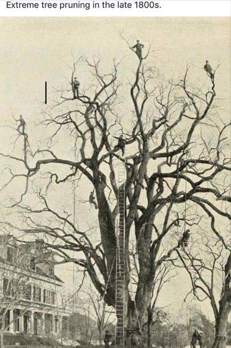 Check out this photo of 'extreme' tree pruning in the 1800s  #LoveATreeDay <br>http://pic.twitter.com/XmHSnF9wWO